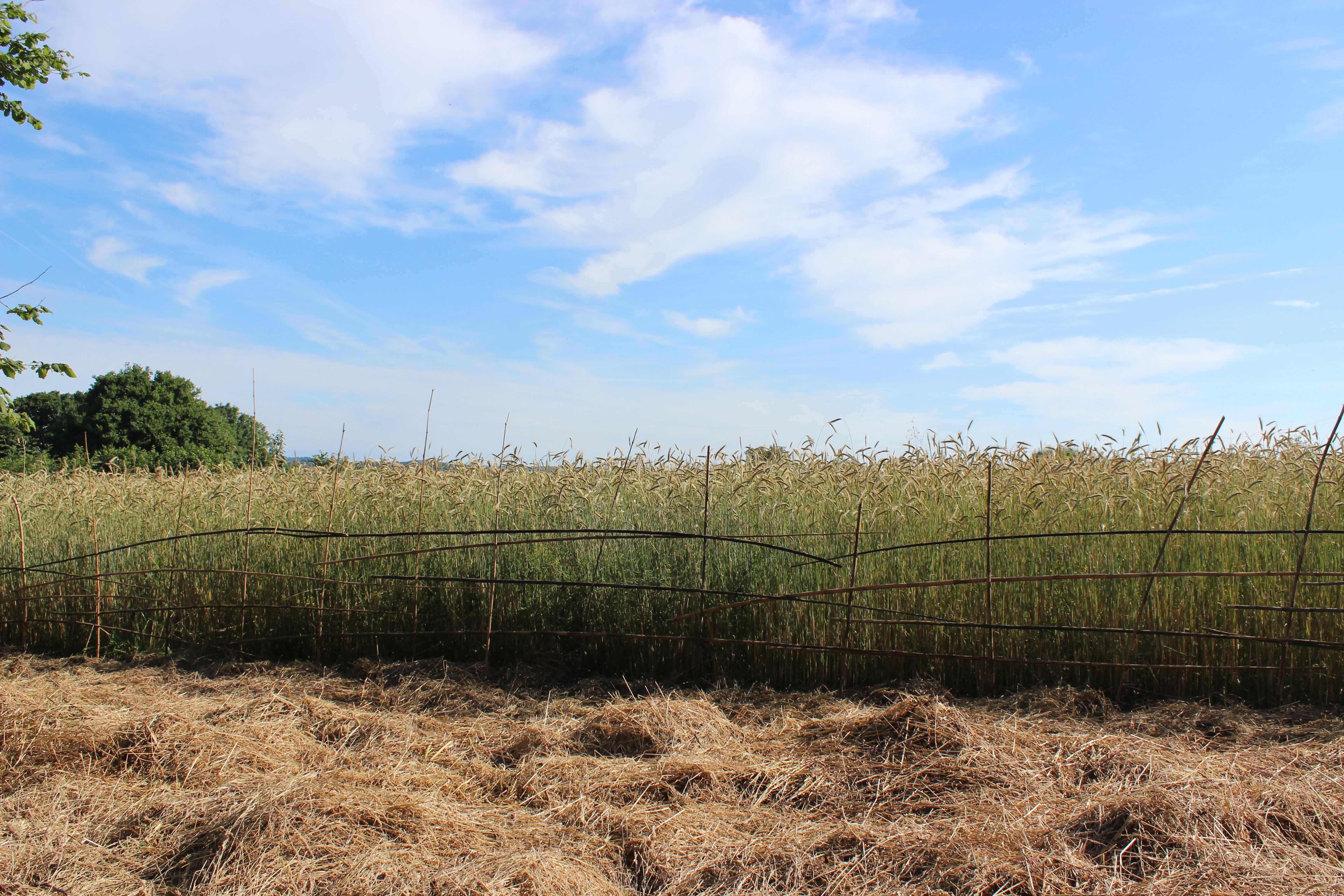 bamboo fence1