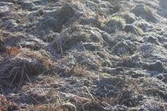 hoed field_frost