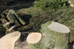 stumps_wood