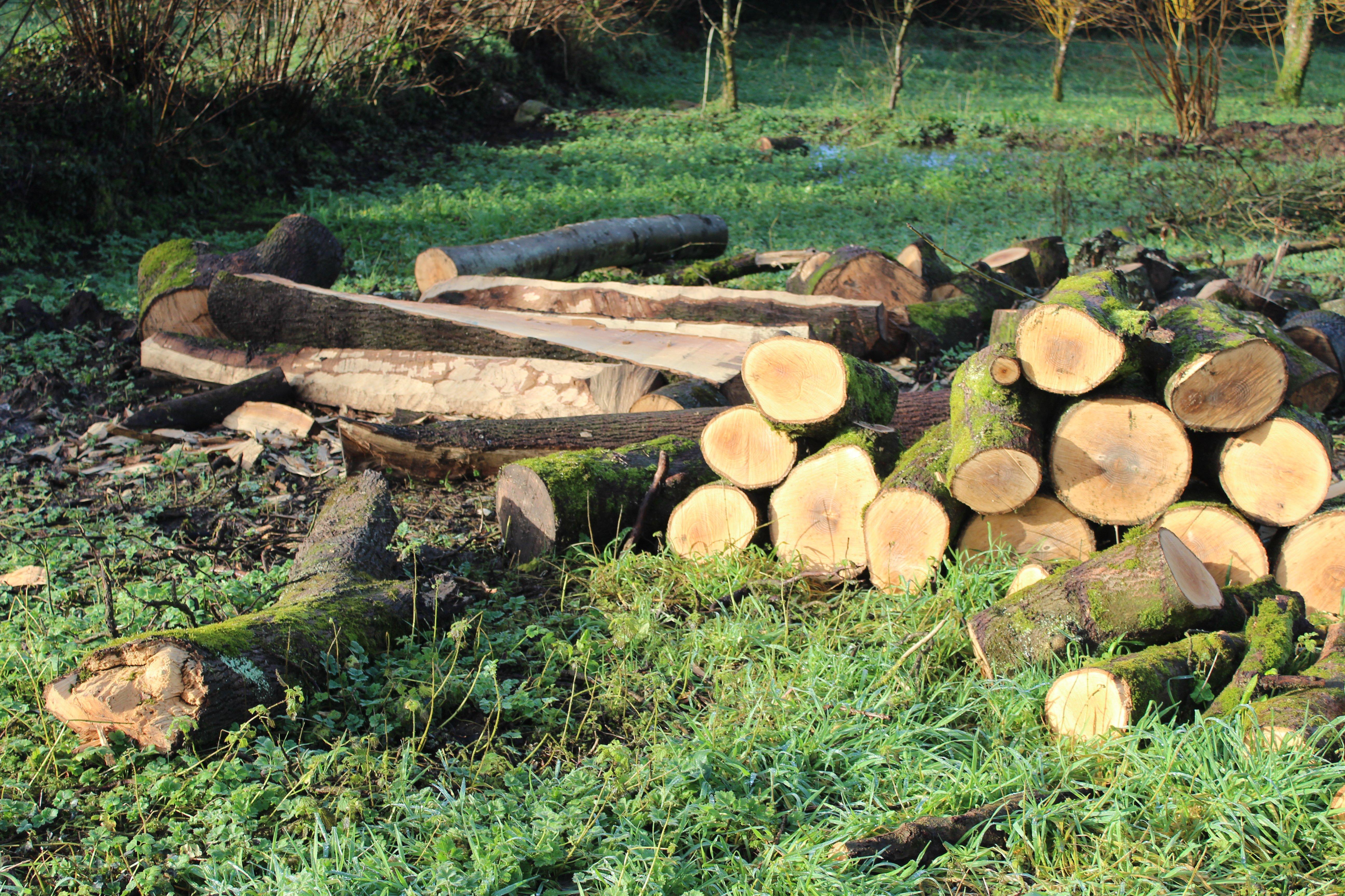 ash wood_2