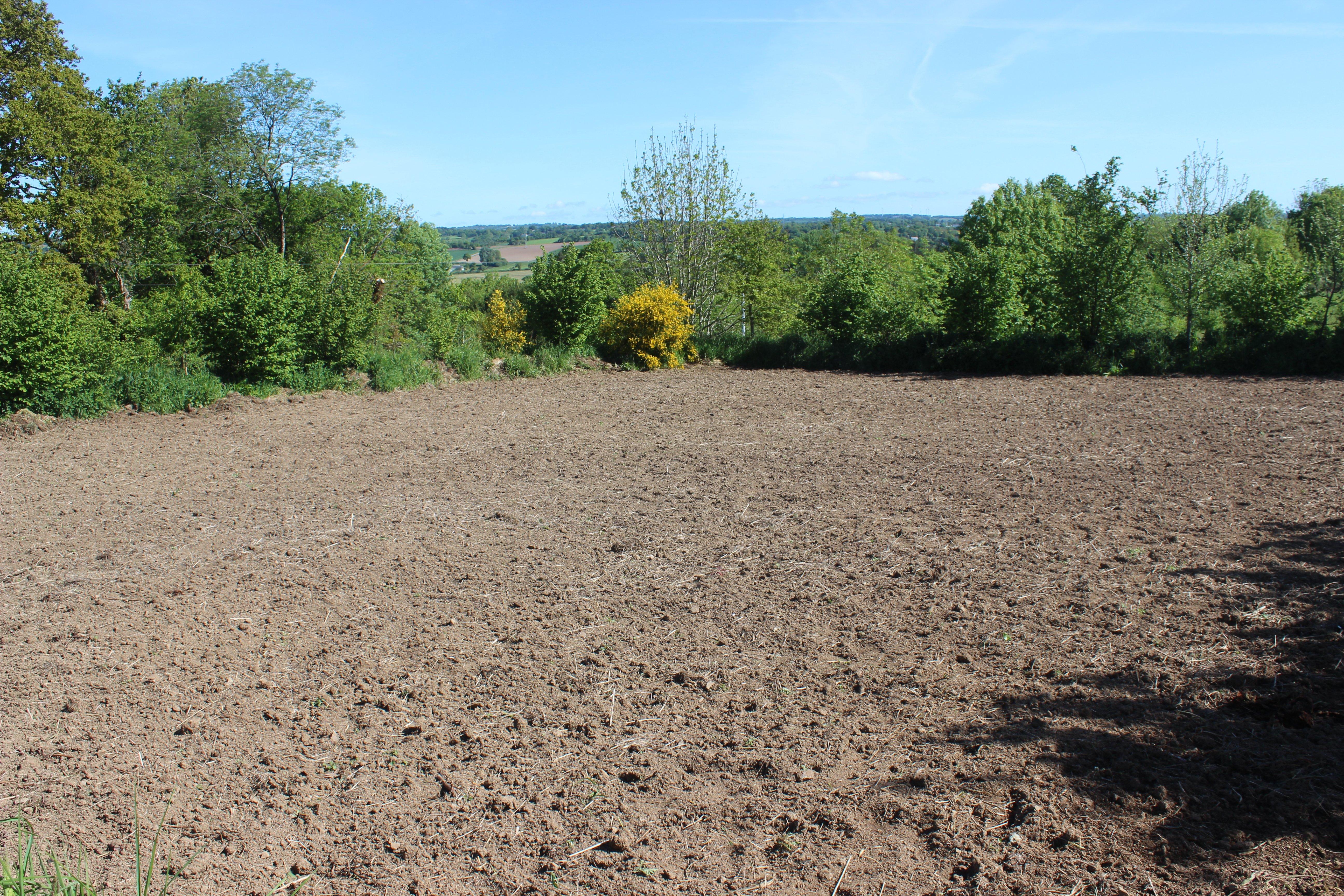 buckwheat field_prepared