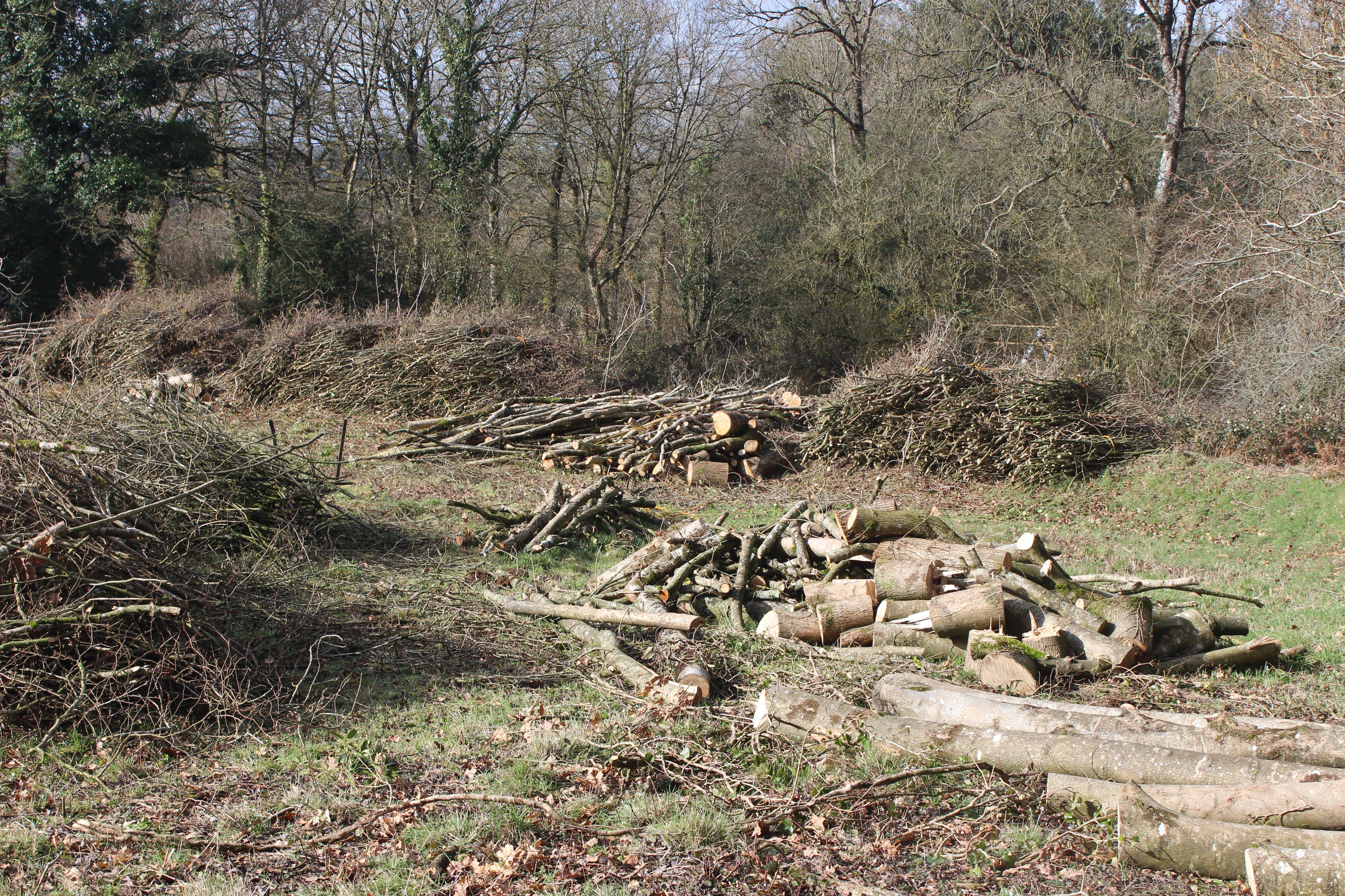 fagoots wood_far2