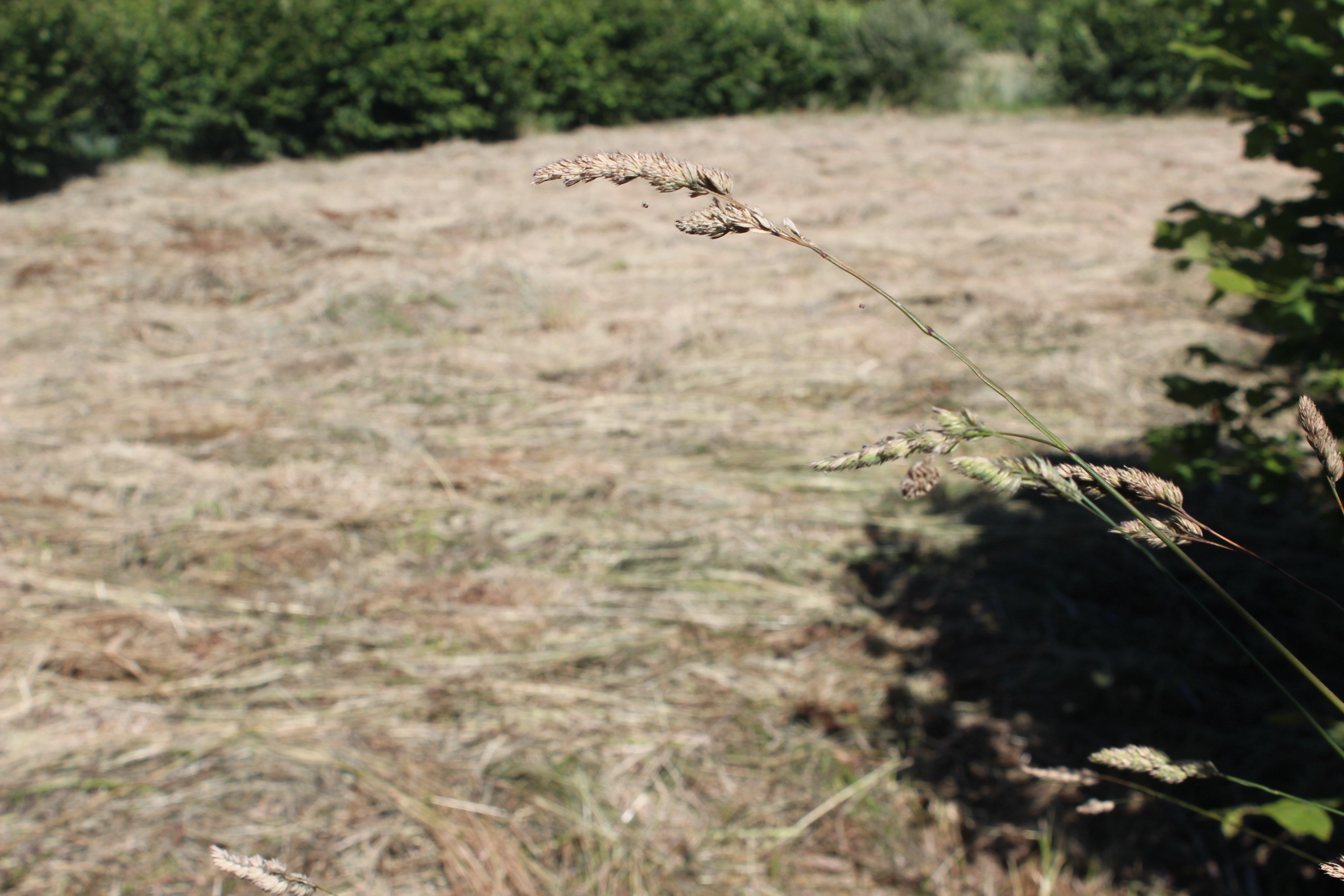 grass_cut field
