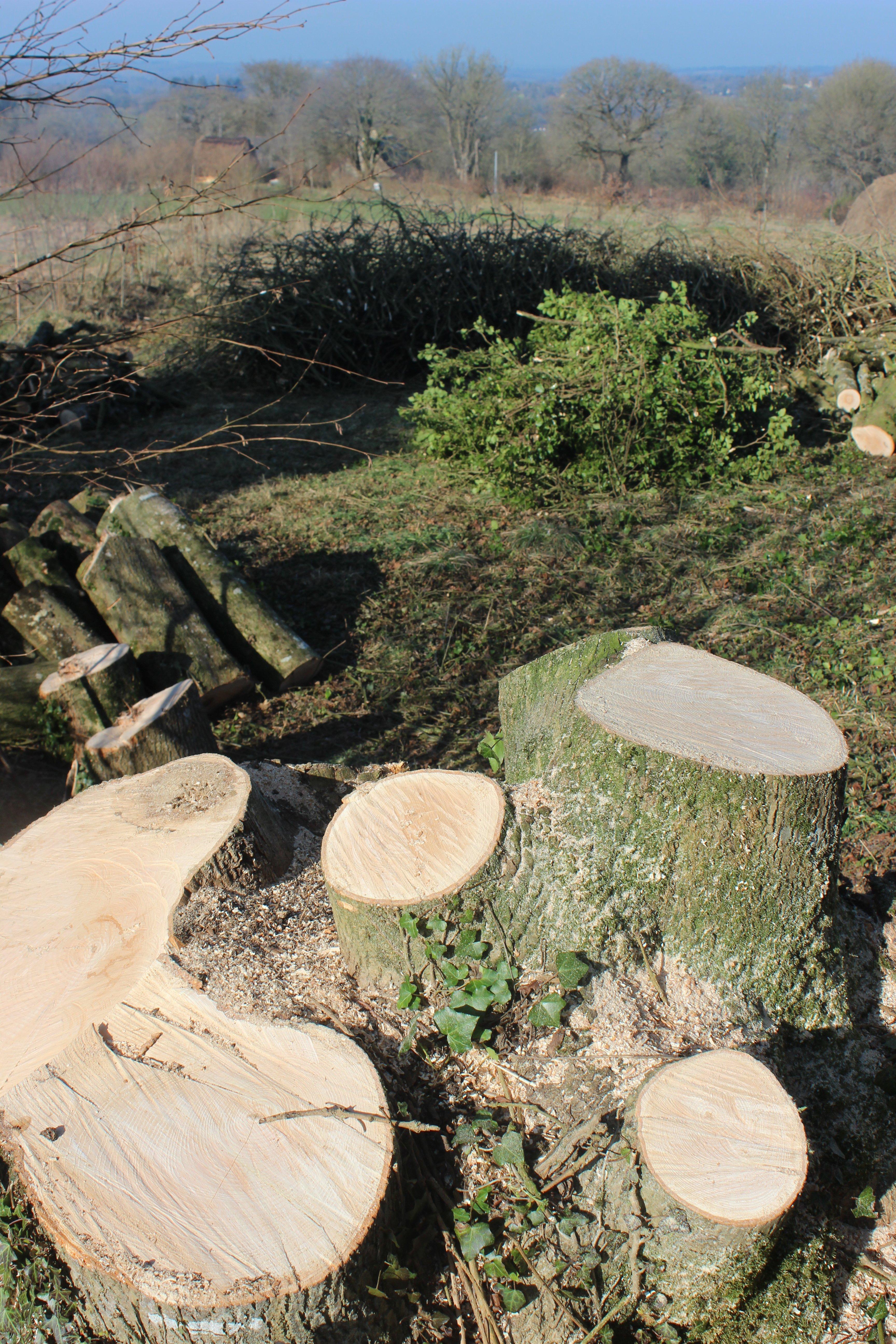 stumps_wood