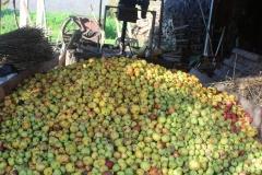 apples_press
