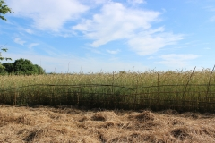 bamboo fence1