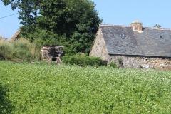 buckwheat_oven_house