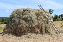 hay stack1