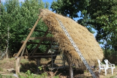 thatched shed1