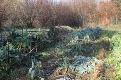 vege garden_leeks