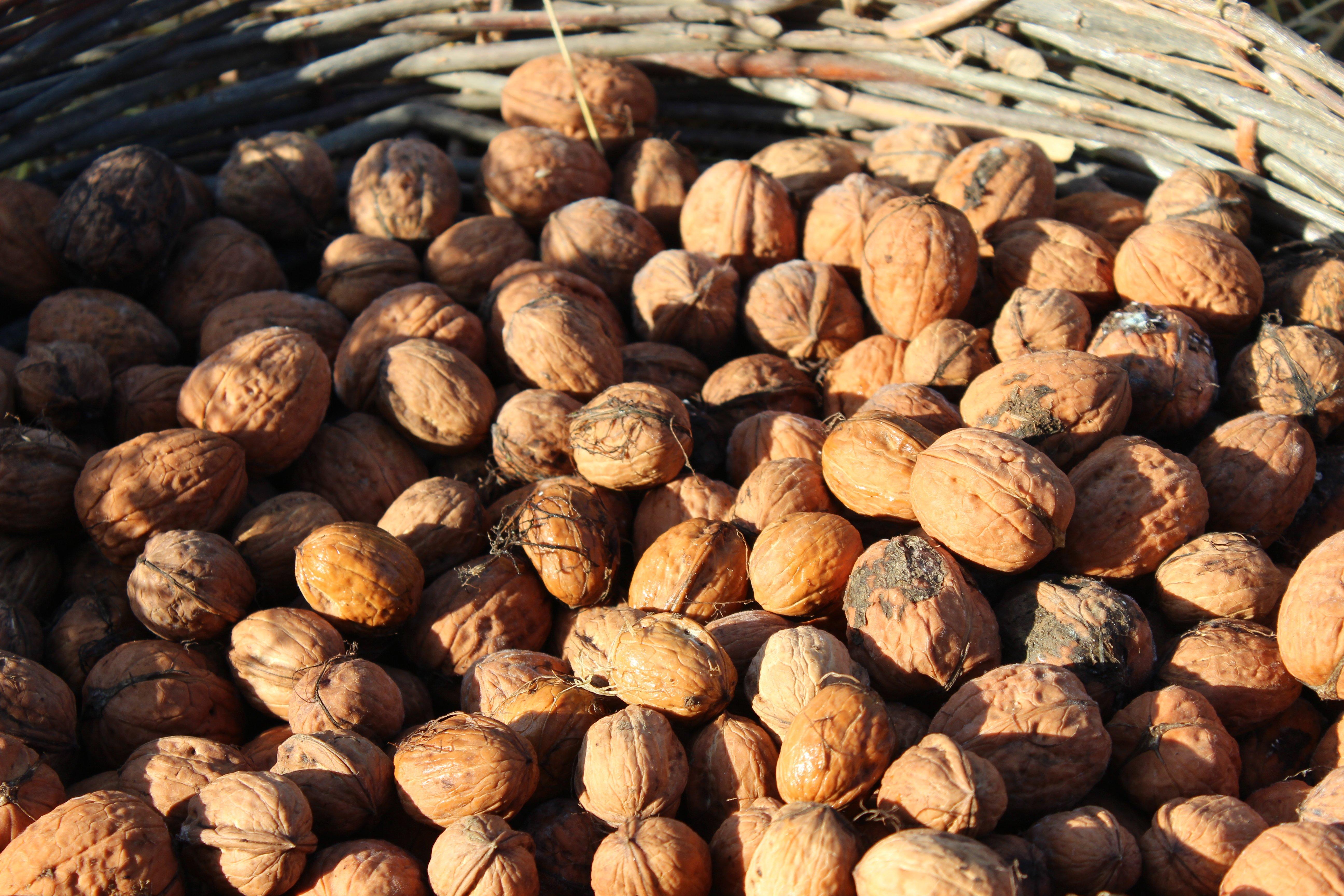 walnuts_basket