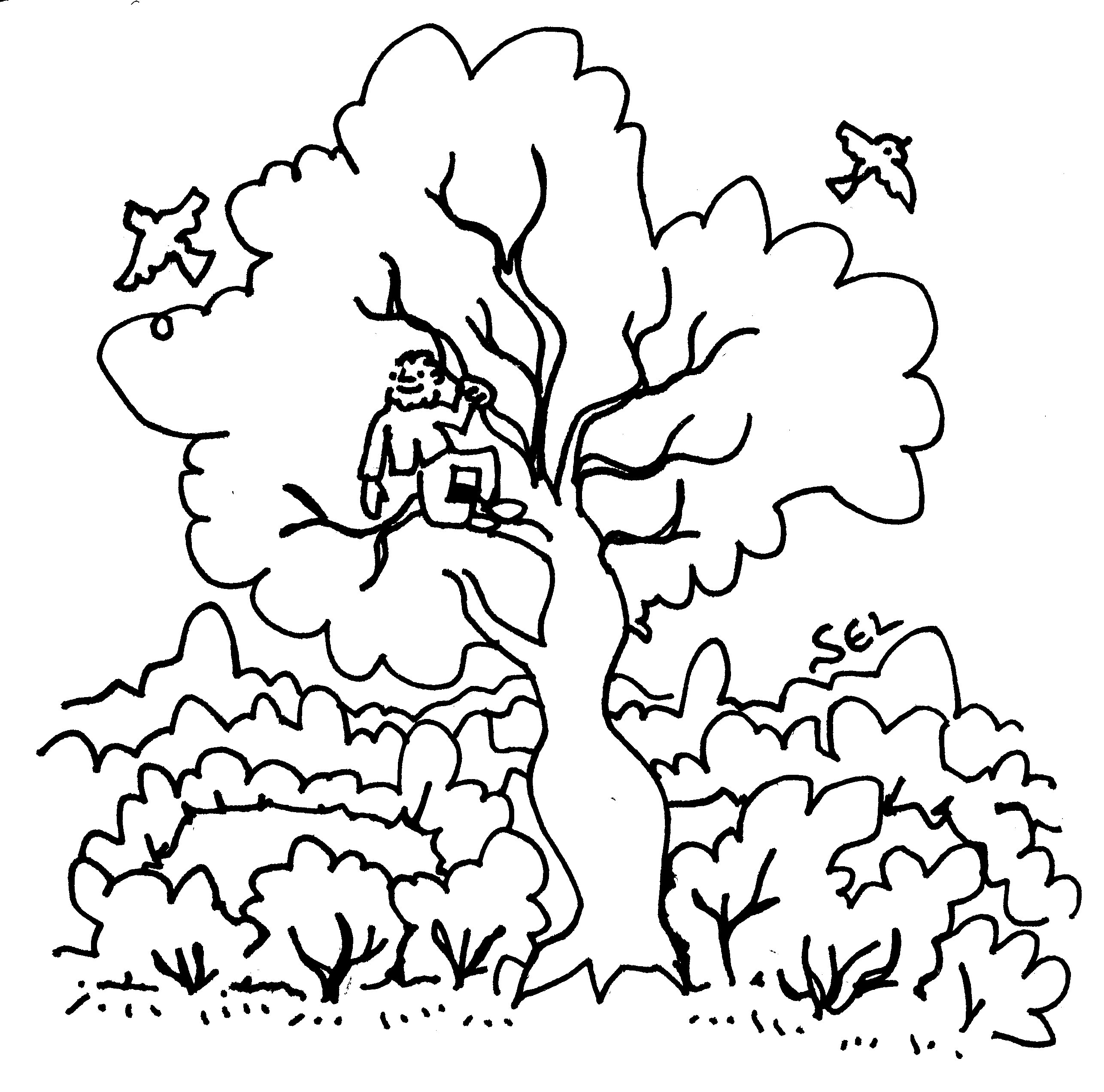 tim_treetops011